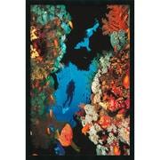 "Amanti Art  ""Coral Reef"" Framed Animal Art, 37.38"" x 25.38"""