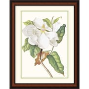 "Amanti Art Georg Dionysius Ehret ""Magnolia Maxime Flore"" Framed Print Art, 28"" x 21"""