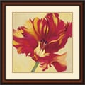 Amanti Art Jennifer Hollack in.Tulipan Threein. Framed Print Art, 27in. x 27in.