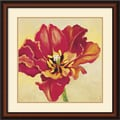 Amanti Art Jennifer Hollack in.Tulipan Onein. Framed Print Art, 27in. x 27in.