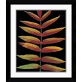 Amanti Art Christopher Griffith in.Staghorn Sumac IIin. Framed Print Art, 30.12in. x 25.62in.