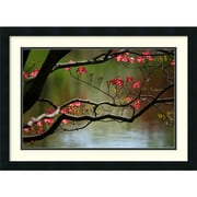 Amanti Art Andy Magee Dogwood in Bloom Framed Print Art, 19 x 26