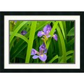 Amanti Art Andy Magee in.Purple Irisin. Framed Print Art, 19in. x 26in.