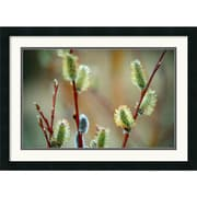 "Amanti Art Andy Magee ""Mountain Willow"" Framed Print Art, 19"" x 26"""