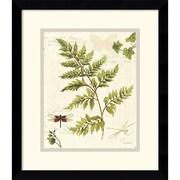 "Amanti Art Lisa Audit ""Ivies and Ferns I"" Framed Print Art, 15.12"" x 13.12"""