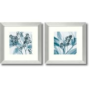 "Amanti Art Steven N. Meyers ""Eucalyptus"" Framed Print Art Set, 14.12"" x 14.12"""