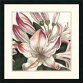 Amanti Art Wild Apple Portfolio in.Botanique Square IIin. Framed Print Art, 25in. x 25in.