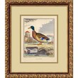 "Amanti Art ""The Duck(Le Canard)"" Framed Print Art, 16.12"" x 13.88"""