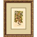 Amanti Art in.Apple(Malum Reginale)in. Framed Print Art, 15.88in. x 12.88in.