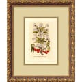 Amanti Art in.Cherry(Cerasus Multiflora)in. Framed Print Art, 15.88in. x 12.88in.