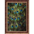 Amanti Art  in.Peacock Splendor Iin. Framed Animal Art, 35.62in. x 25.5in.