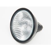 Bulbrite® 20 Watt 12 Volt MR16 Halogen Flood BAB Bulb, Black