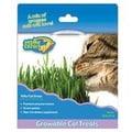 Cosmic Catnip Kitty Cat Grass