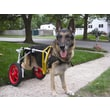 Best Friend Mobility Dog Wheelchair; Large (25'' H x 19'' W x 5'' D)