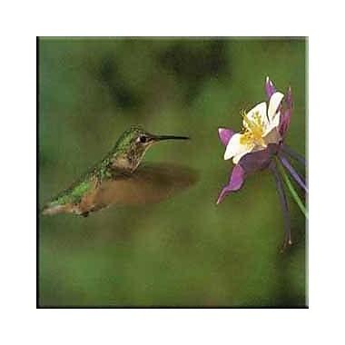 McGowan Tuftop Hummingbird and Columbine Trivet