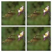 McGowan Tuftop Hummingbird and Columbine Coasters (Set of 4)