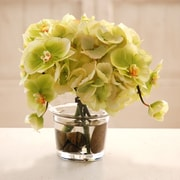 Jane Seymour Botanicals Hydrangea and Phalaenopsis Orchid in Glass Vase