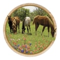 Thirstystone Yearlings & Wildflowers Coaster (Set of 4)