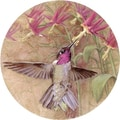Thirstystone Winged Jewel Coaster (Set of 4)