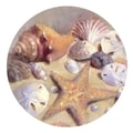 Thirstystone Sea Shells Occasions Coaster (Set of 4)