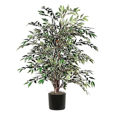 Vickerman Smilax Variegated Bush Tree in Pot