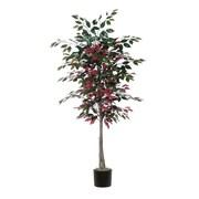 Vickerman Capensia Tree in Pot