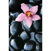 Brewster Home Fashions Ideal Decor Stone Orchid Wall Mural
