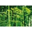 Brewster Home Fashions Ideal Decor Bamboo In Spring Wall Mural