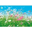 Brewster Home Fashions Ideal Decor Flower Meadow Wall Mural