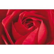 Brewster Home Fashions Ideal Decor Limportant Cest La Rose Wall Mural
