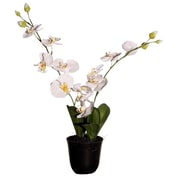 Vickerman Floral 24'' Artificial Potted Cymbidium Orchids in White and Yellow