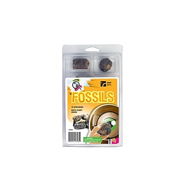 American Educational Products Explore With Me Geology® Fossils Set