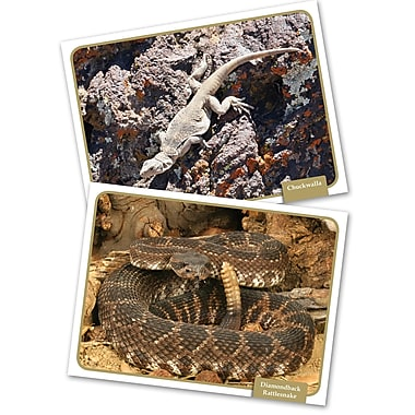 Edupress® Reptiles & Amphibians Science Comprehension Cards, 32/Set