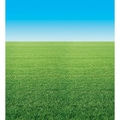 Pacon® Fadeless® Designs 48in. x 50' Summer Horizon Bulletin Board & Kraft Roll