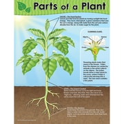 Teacher Created Resources Parts Of A Plant Chart, Science