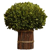 Napa Home & Garden Preserved Boxwoods Preserved Greens Willow Stand Desk Top Plant