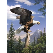 Reeves Paint By Numbers Screaming Eagle Painting