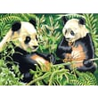 Reeves Paint By Numbers Large Pandas Painting