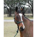 Hamilton Pet Products Rope Halter with Lead Adult Horse; Hunter Green