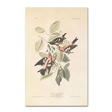 Trademark Fine Art 19