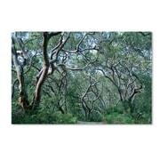 """Trademark Fine Art 22"""" x 32"""" Wooden Frame Beautiful Minds Artwork"""