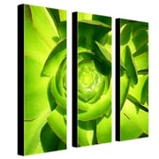 "Trademark Fine Art 10"" x 32"" Canvas Gallery Wrapped"