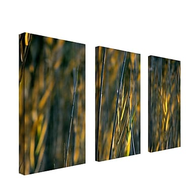Trademark Fine Art 12in. x 24in. Wooden frame Canvas Wall Art