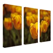 """Trademark Fine Art 14"""" x 32"""" Canvas Gallery Wrapped"""