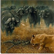 iCanvas ''Lioness and Cape Buffalos'' Canvas Wall Art by Harro Maass; 37'' H x 37'' W x 1.5'' D