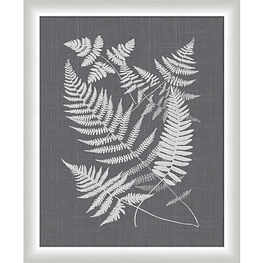 Melissa Van Hise Buckler Ferns Framed Graphic Art; Gray