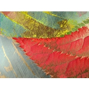 Carlyle Fine Art Nature Coral Dust by Jordan Carlyle Graphic Art; 15'' x 20''
