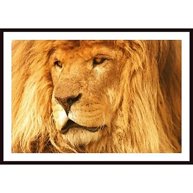 Printfinders 'A Lion' by Con Tanasiuk Framed Photographic Print