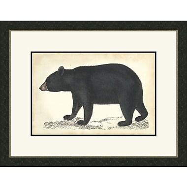 Melissa Van Hise Bear I Framed Graphic Art