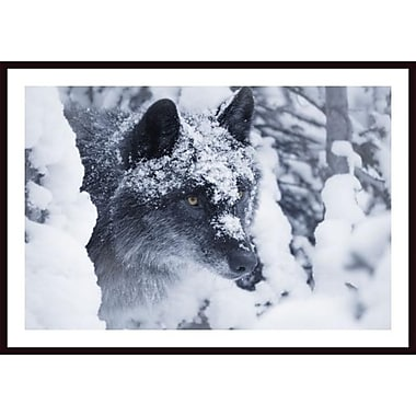 Printfinders 'Lone Wolf in Snow' by Don Hammond Framed Photographic Print